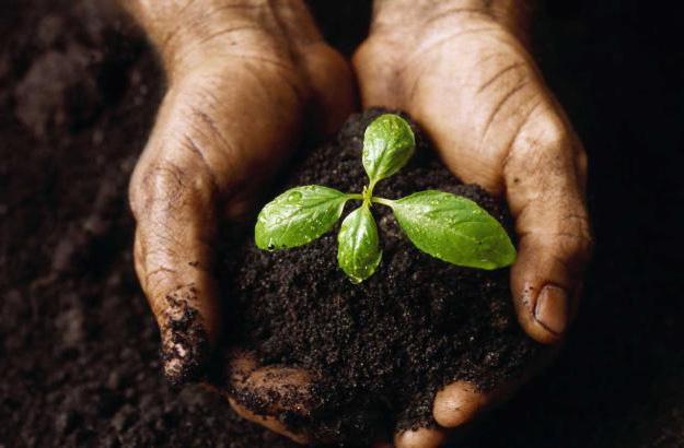 Жизнь в почве — интересное видео о неведомом для нас мире