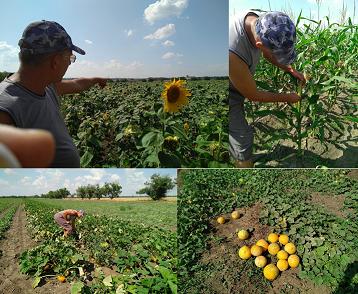 Плодотворное сотрудничество фермера Слободзейского района с Научно-Исследовательским Институтом Сельского Хозяйства