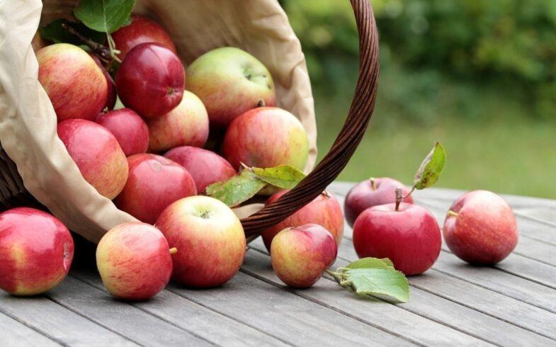 «Яблочные прогнозы» — Первая международная яблочная онлайн-конференция проекта EastFruit состоялась 20 мая. Видео прилагается