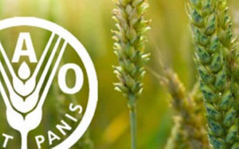 ФАО объявил о начале провозглашенного ООН Международного года овощей и фруктов – 2021