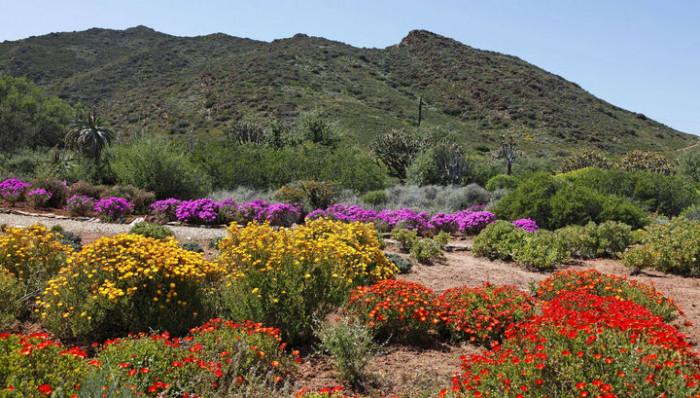 Лесосад и его биоразнообразие — ключ к успеху