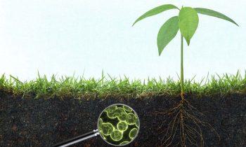 Микроорганизмы, как альтернатива пестицидам.
