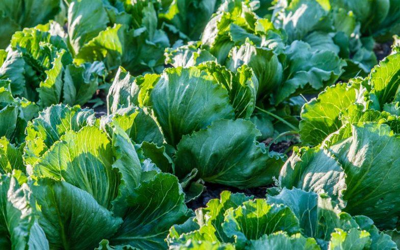 Итоги и программа развития экологического направления сельского хозяйства в Приднестровье на 2019 год