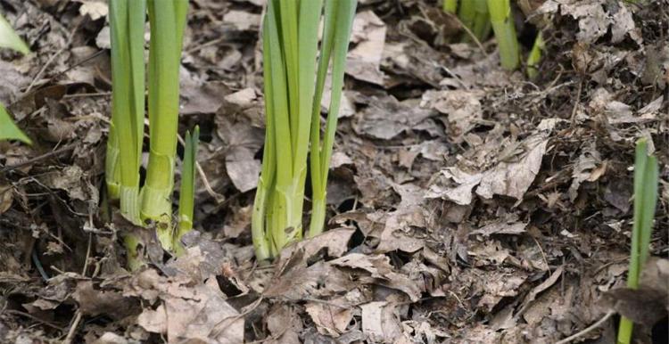 Листовой опад как  био-удобрение для почвы